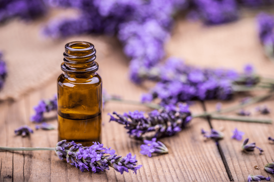 Lavendelöl gegen Haarausfall Diese Wirkung hat es auf die Haare!